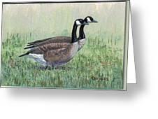 Canada Geese Pair Greeting Card