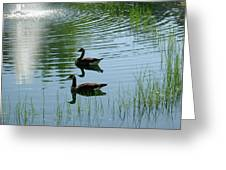 Canada Geese Swimming By Fountain Greeting Card