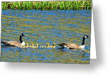 Canada Geese With 5 Goslings Greeting Card