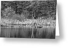 Canada Goose Couple Bw Greeting Card