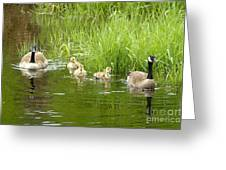 Canada Goose Family 2 Greeting Card