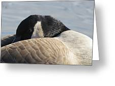 Canada Goose Head Greeting Card