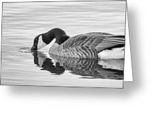 Canada Goose I Greeting Card