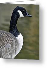 Canada Goose Portrait Greeting Card
