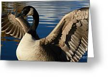 Canada Goose Spreading The Wings Greeting Card