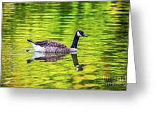 Canada Goose Swimming In A Pond Greeting Card