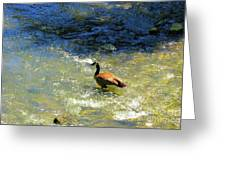 Wildlife Scenes #3 Greeting Card