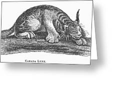Canada Lynx, 1873 Greeting Card