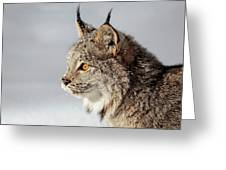 Canada Lynx Up Close Greeting Card