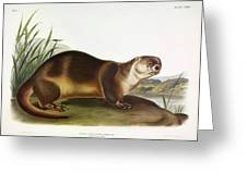 Canada Otter Greeting Card