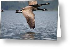 Canada's Goose Greeting Card