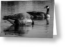 Canadian Geese 2 Greeting Card