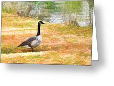 Canadian Geese 6 Greeting Card