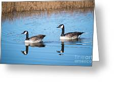Canadian Geese Couple Greeting Card