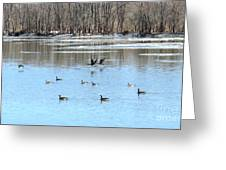 Canadian Geese In Flight Greeting Card