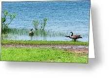 Canadian Geese - Wichita Mountains - Oklahoma Greeting Card