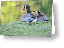Canadian Goose Mother And Babies Greeting Card
