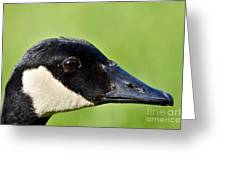 Canadian Goose Portrait Greeting Card