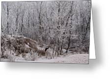 Canadian Ice Fog  Greeting Card