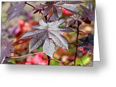 Canadian Leaf Greeting Card