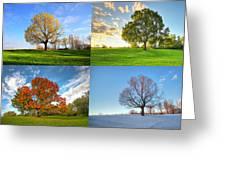 Canadian Seasons Greeting Card by Mircea Costina Photography