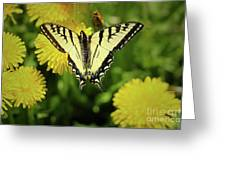 Canadian Swallowtail Butterfly Greeting Card