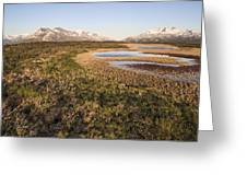 Canadian Tundra In Evening Light. Greeting Card