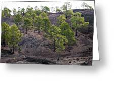 Canary Pines Nr 3 Greeting Card