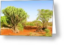 candelabra euphorbia tree Euphorbia candelabrum, Kenya Greeting Card