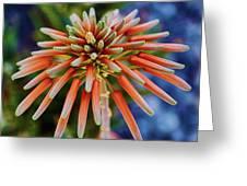 Candelobra Aloe In San Diego Greeting Card
