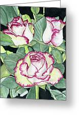 Candy Cane Roses Greeting Card