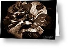 Candy Stripe Rose Sepia  Greeting Card