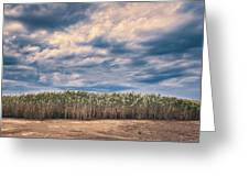 Cane Thicket Greeting Card