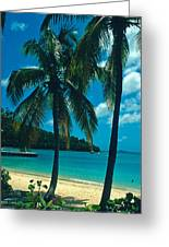Caneel Bay Palms Greeting Card