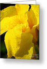 Canna At Sunrise Greeting Card