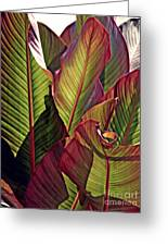 Canna Leaves 2   Greeting Card
