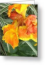 Canna Lilies Greeting Card by David Bearden