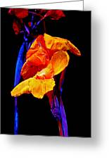 Canna Lilies On Black With Blue Greeting Card