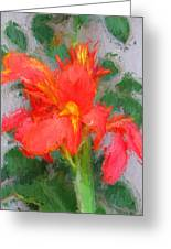 Canna Lily 3 Greeting Card