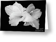 Canna Lily In Black And White Greeting Card