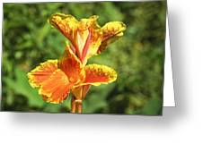 Canna Lily Greeting Card by Kenneth Albin