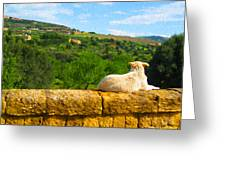 Cano Di Agrigento Greeting Card