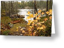 Canoe At Little Bass Lake Greeting Card by Larry Ricker