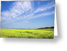 Canola Blue Greeting Card