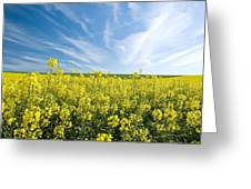 Canola Field Greeting Card