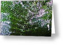 Canopy Of Ferns Greeting Card