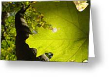 Canopy View Greeting Card