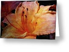 Cantaloupe Lily 3683 Idp_2 Greeting Card