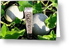 Cantaloupe Greeting Card