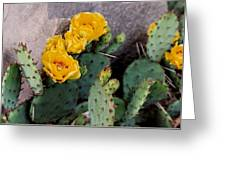 Cantankerous Cactus Greeting Card